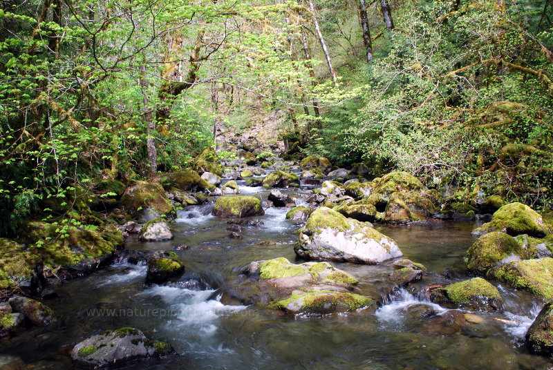 Creek in Washington State