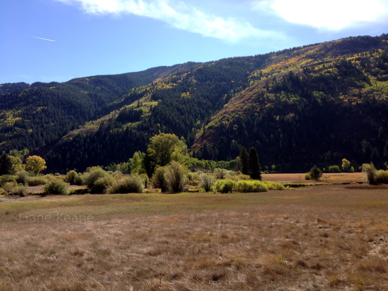 Meadow in Colorado