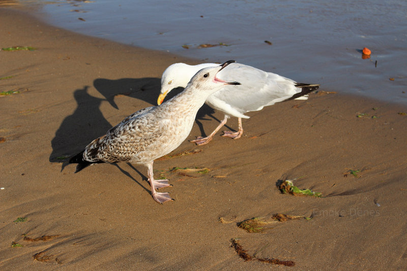 Seagulls on the beach!