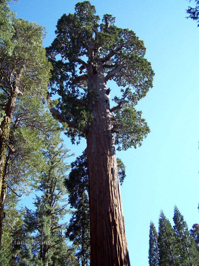 Sequoia in California