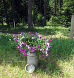 Jug of Flowers in the woods