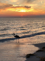 Silhouette of a bird in Anna Maria Island, Florida