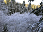 Hoar Frost in the Mountains of Idaho