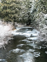A frosty river in the woods!