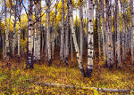 Autumn in Steamboat Springs, CO
