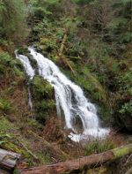 Cascade Creek in Quinault Rain Forest.