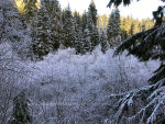 Frost covered trees and bushes in Idaho