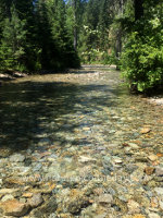 Mountain Montana stream in early summer