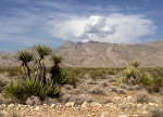 A desert storm approaches at the Mojave Desert in Nevada