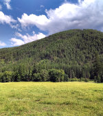 Mountain Meadow in Montana