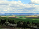 Clouds, fields and the Palouse