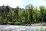 Dosewallips River on the Olympic Peninsula