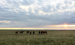 Horses in Big Sky Country.